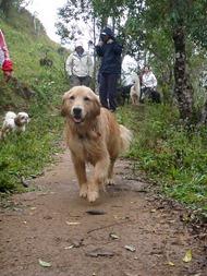 Dogs Trekking 4 (257)
