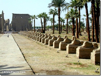 Luxor Temple Avenue of Sphinxes, tb110500232