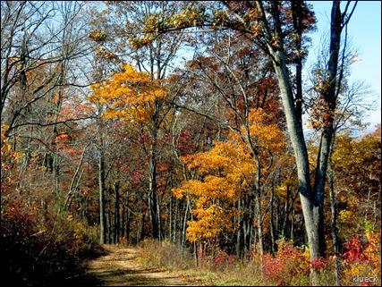 the road to Panther Ridge Fire Station, Murpny, North Carolina