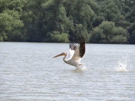 20. Pelican decolare.JPG