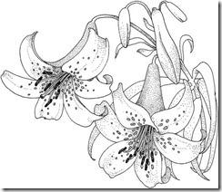 floracian-de-lirios-dibujos-para-colorear