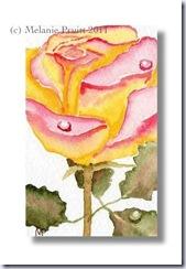 thecratorspalette roses
