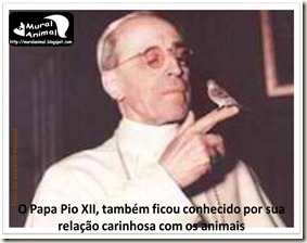 papa_ama_gatos (14)