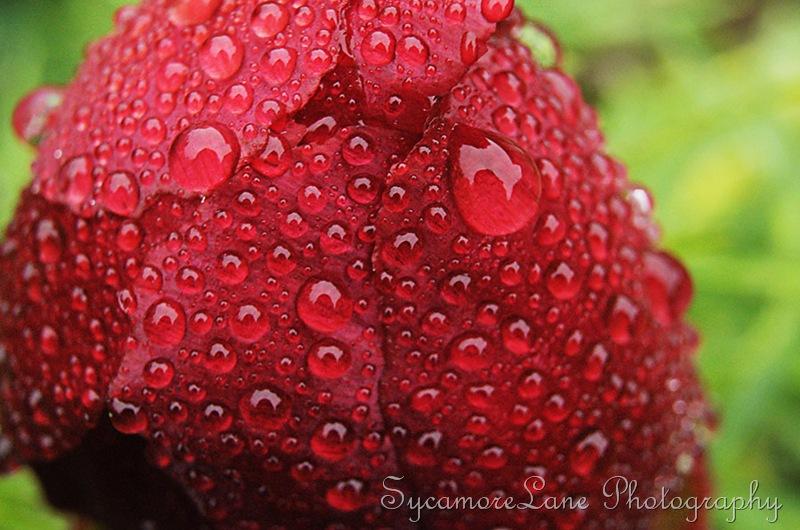 rain drops-w