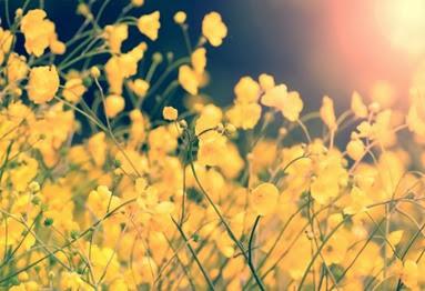 flowers-1390938718Qf4