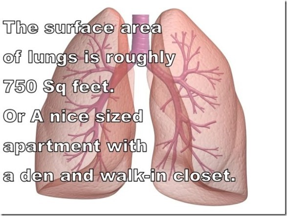 human-body-facts-9