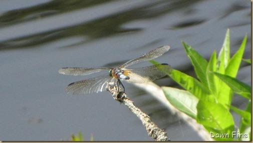 Welfleet audubon_004