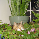 Riley in my plants.