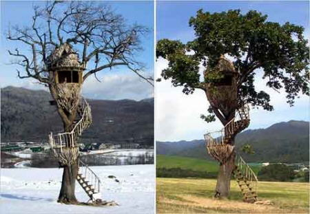 Amazing Tree Houses