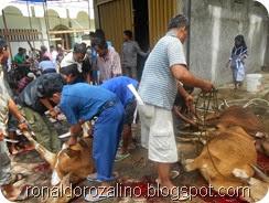 Suasana Pemotongan Hewan Kurban di Masjid Raya Kota Teluk Kuantan (11)