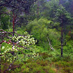 norwegia2012_66.jpg