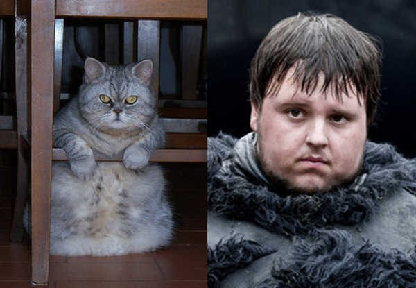 E se os personagens de Game of Thrones fossem gatos 18