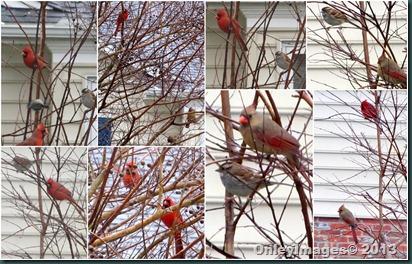many cardinals1