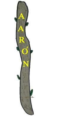 biografia biblica: AARÓN
