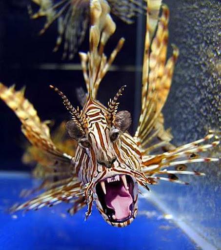 1014 8 226 2007 Amazing Photoshopped Animals Pics