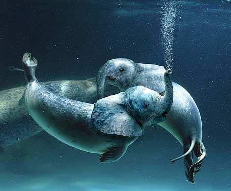 1014 11 226 2007 Amazing Photoshopped Animals Pics