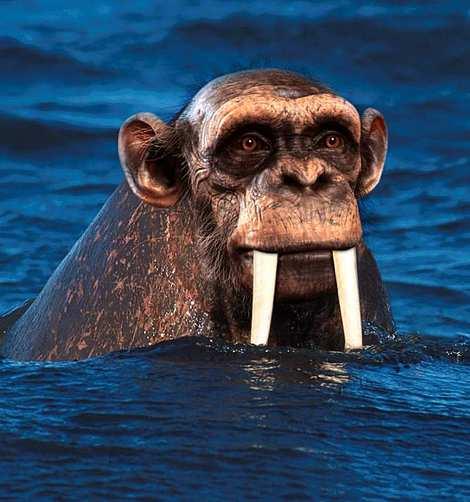 1014 20 226 2007 Amazing Photoshopped Animals Pics