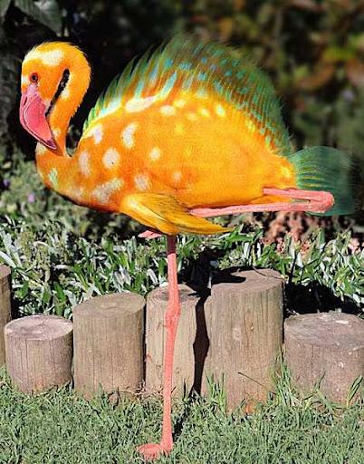 1014 19 226 2007 Amazing Photoshopped Animals Pics