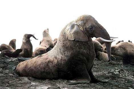 1014 22 226 2007 Amazing Photoshopped Animals Pics