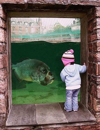 1014 28 226 2007 Amazing Photoshopped Animals Pics