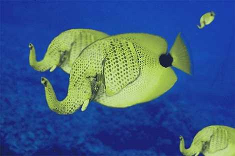 1014 31 226 2007 Amazing Photoshopped Animals Pics