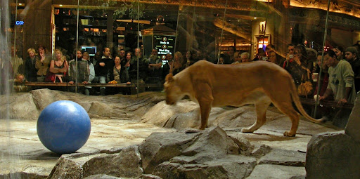 MGM Grand lion exhibit 1024x510 Richest Casinos In The World