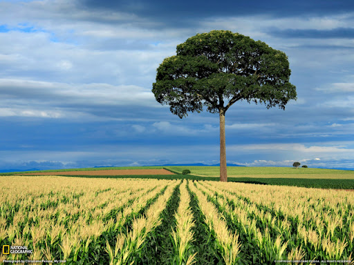Cornfield Beautiful Landscape Photos