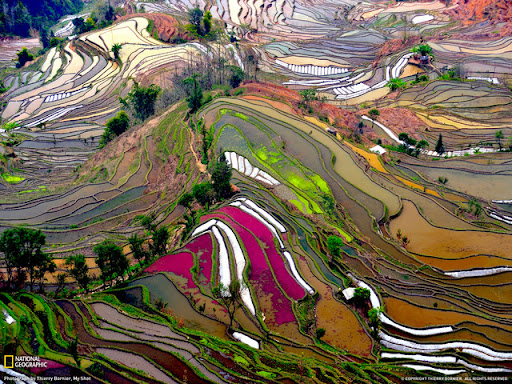 Terraced Rice Field Beautiful Landscape Photos