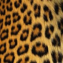 Cheetah Keyboard Skin icon