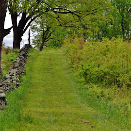 StoneWall Path Through the Woods by Sherry Moore - Landscapes Forests ( battlefield, pathway, civil war, path, forest, stone wall, woods, gettysburg, nature, landscape )