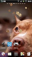 Screenshot of Pitbull Dog Live Wallpaper