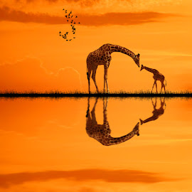 Where are you my light ? by George Leontaras - Digital Art Animals ( orange, hellas, volos, greece, art, fine art, girafe, photoshop.glart, lake, digital, birds, manipulation )