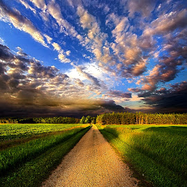 Room to Roam by Phil Koch - Landscapes Travel ( vertical, photograph, farmland, yellow, storm, leaves, love, sky, nature, tree, autumn, snow, flower, wind, orange, twilight, agriculture, horizon, portrait, dawn, environment, season, national geographic, serene, trees, floral, inspirational, wisconsin, natural light, road, phil koch, spring, photography, sun, farm, path, horizons, rain, inspired, clouds, office, park, green, dirt road, scenic, morning, shadows, wild flowers, field, red, blue, sunset, fall, peace, meadow, summer, sunrise, earth, landscapes,  )