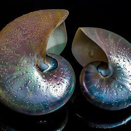 duo by Adjie Tjokrosoedarmo - Artistic Objects Still Life (  )