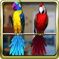 App Talking Parrot Couple Free APK for Kindle
