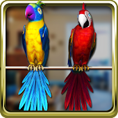 Talking Parrot Couple Free APK for Bluestacks
