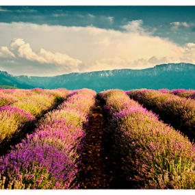 by Vanja Keser - Landscapes Prairies, Meadows & Fields ( lavender fields )