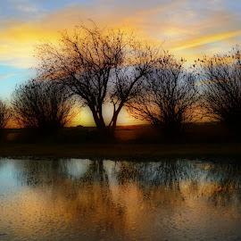 Sunset Reflection by Tara Hodge - Landscapes Sunsets & Sunrises ( #alberta #canada #sunset #reflection )