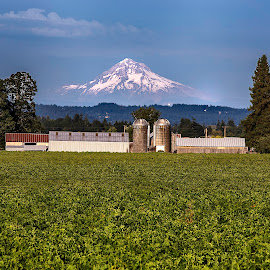 by Lee Gochenour - Landscapes Mountains & Hills ( farm, oregon, mountain, volcano )