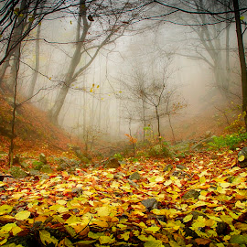 Autumn by Costin Mugurel - Nature Up Close Leaves & Grasses ( mountains, nature, fog, autumn, forest, leaves )