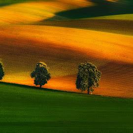 Tree Family by Pawel Uchorczak - Landscapes Mountains & Hills ( cech, moravia, best, light, fields )