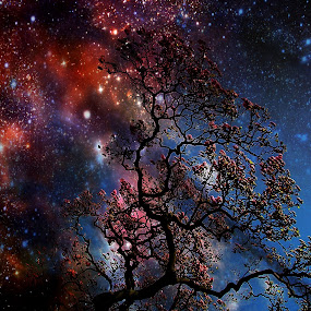 by Ivica Dujic - Landscapes Starscapes