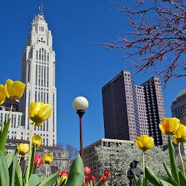 Columbus skyline by Dan Ferrin - City,  Street & Park  Skylines ( skyline, tulips, leveque tower, huntington building, city )