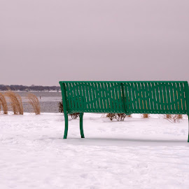 Riverside Snow Bench by Alan Roseman - Artistic Objects Furniture ( cars in snow, february, new england, rhode island, snow, narragansett bay, lawn chairs )
