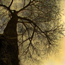 by Ydoya Rodriguez - Nature Up Close Trees & Bushes (  )