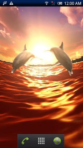 Dolphin Sun Trial
