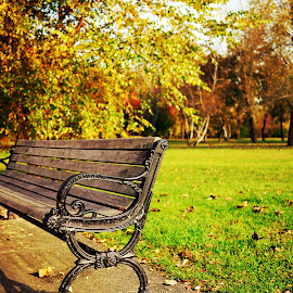 A bench in the park by Wei San Ooi - City,  Street & Park  City Parks ( park, bench, autumn, fall, city,  )