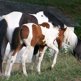 by Delores Mills - Animals Horses (  )