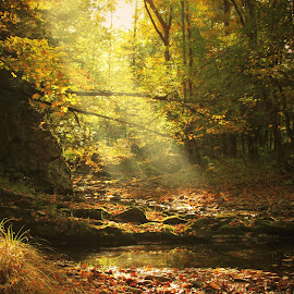 Autumn Has Come by Aaron Shaver - Landscapes Forests ( ray, stream, warm, forest, landscape, morning, foilage, sun, nature, color, fog, autumn, fall, creek, trees, beam, light, river, mist )