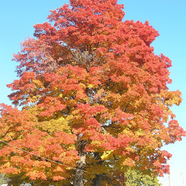 Fall Color in Iowa by Linda McCormick - Nature Up Close Trees & Bushes ( orange, color, beautiful fall, fall, fall color )